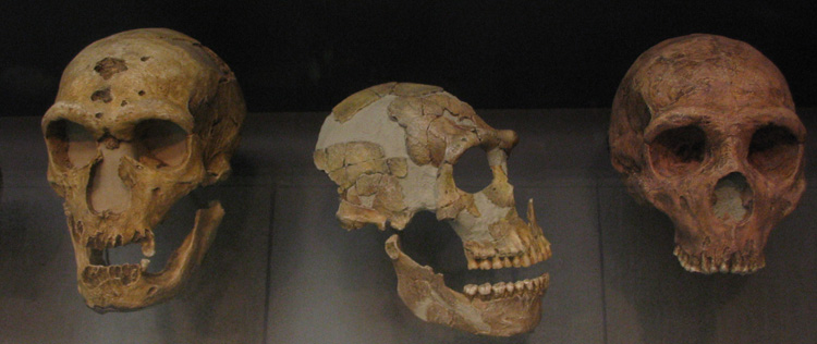 neanderthal skulls by leted, on Flickr