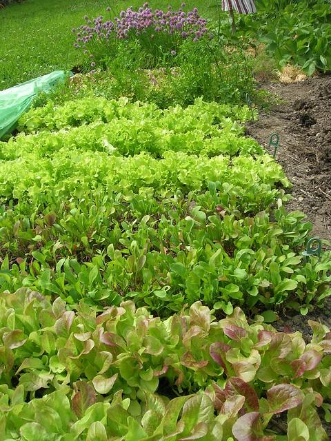 Jardin potager flickr photo sharing for Jardin potager