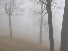 Squirrella in the Mist