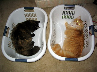 Two laundry baskets, two cats.
