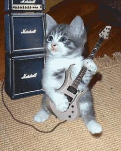 kitten rock by lisamariaboccignone