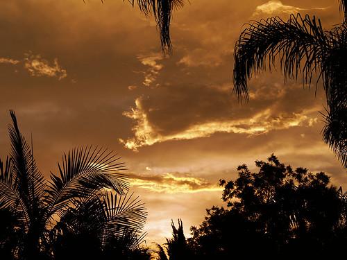 sunset silhouette olympus 2006 tropical mapprinclude zuiko e500 zd 1445mm zuikodigital muzzlehatch