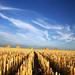 Harvest 2 by Sara Richer