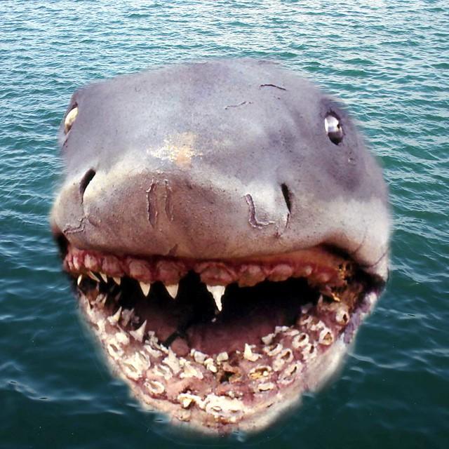 how to make a shark bite shot