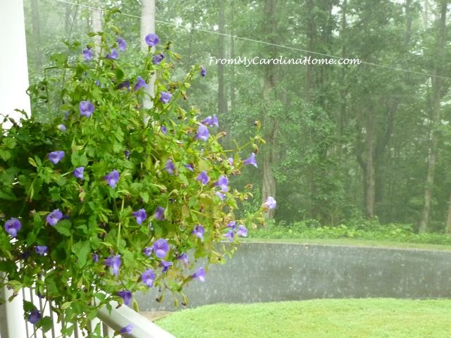 Rainy Garden Day 3