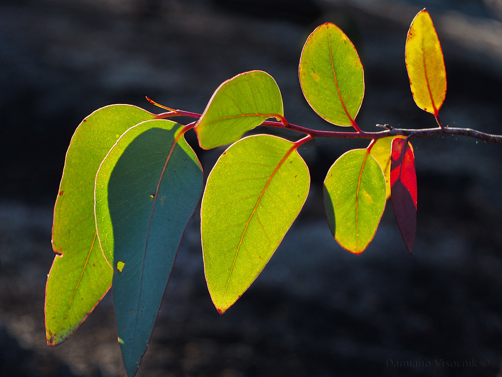 backlit leaves_c