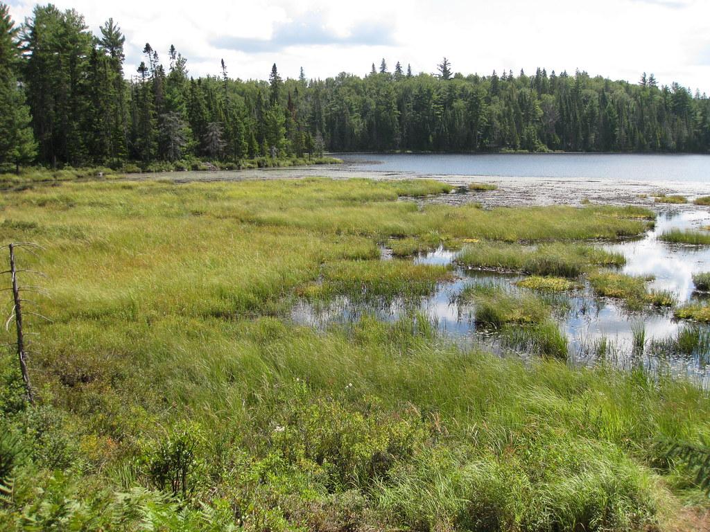 Algonquin Bogs