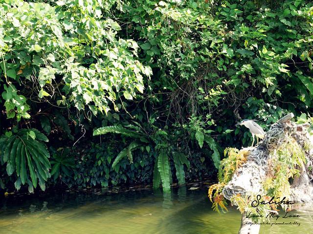宜蘭景點推薦大湖森林風景區 (23)