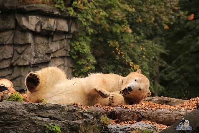 Tierpark Berlin 20.09.2015  017