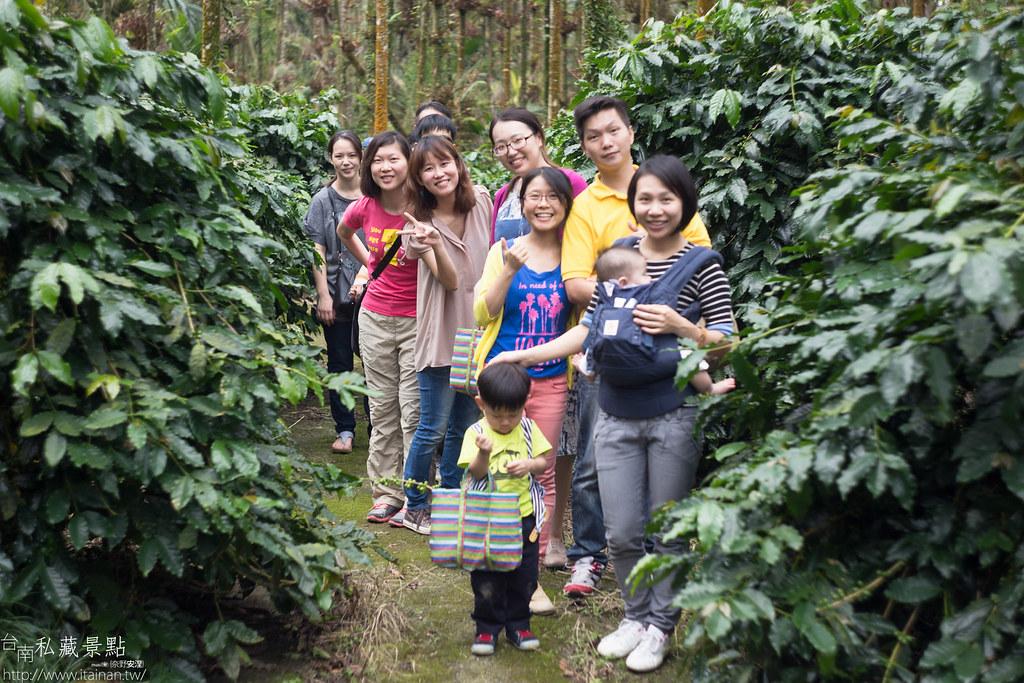 村長咖啡-天池咖啡步道 (23)