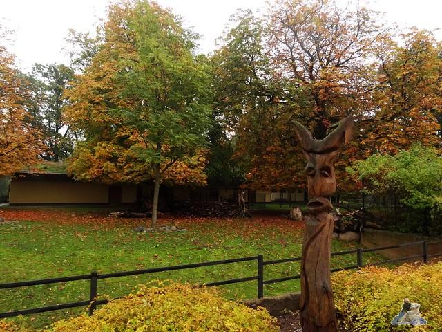 Eisbär Fite im Zoo Rostock 17.10.215 Teil 2  0209