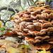 autumn fungi by old_b1oke