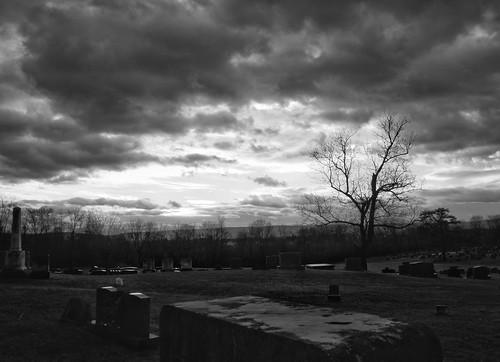 sunrise cemetery berryvilleva greenhillcemetery tree monochrome