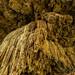 40. Cenotes, Yucatan, Mexico-11.jpg por gaillard.galopere