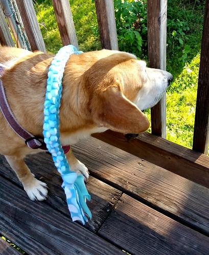 hound mix rescue dog
