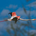 Flamant rose by JeanJoachim