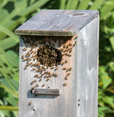 wood, birdhouse, invertebrate, membrane-winged insect, bee,