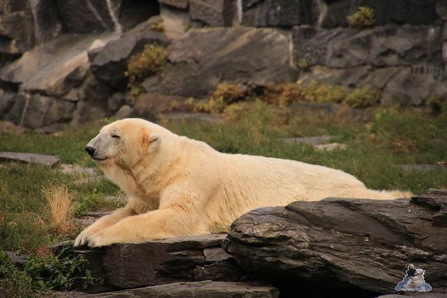 Tierpark Berlin 23.08.2015  0211