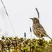 Bob Gunderson has added a photo to the pool:Mt. Davidson, San Francisco, CA.Originally found by Brian Fitch. A life bird for me in San Francisco.ebird.org/ebird/view/checklist?subID=S24862462