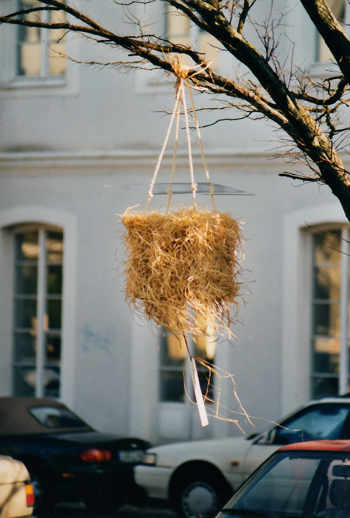 осиное-гнездо