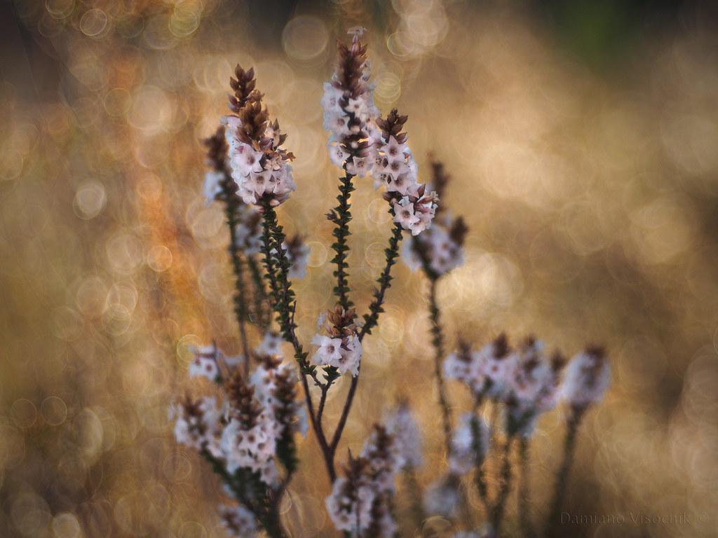 Tiny flowers_b_c