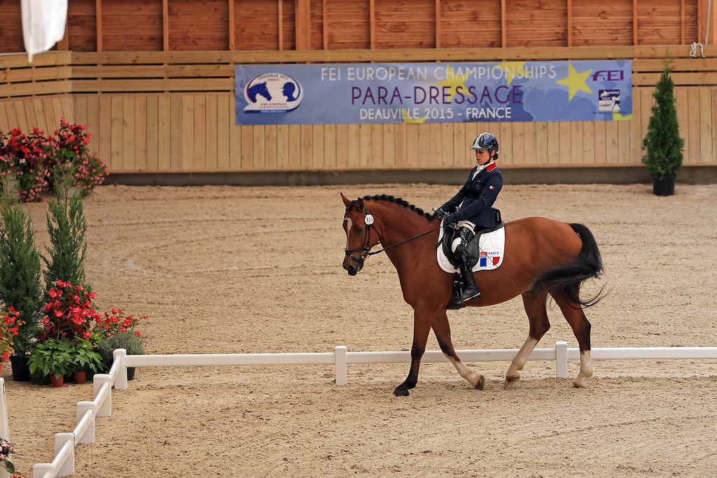 sport etude equitation vaucluse