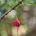 Di, 03.11.15 - 10:56 - Parque Nacional Chiloe