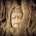 Buddha's face in a tree, Ayutthaya Thailand by gvandenbulcke