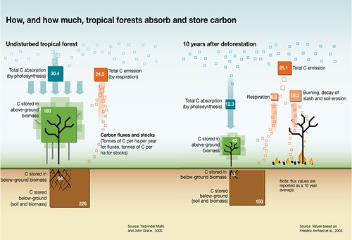 How  And How Much  Tropical Forests Absorb And Store Carbon