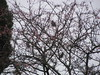 If you squint you can just about convince yourself there are waxwings in this picture