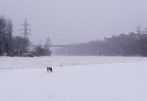 Minnehaha Dog Park