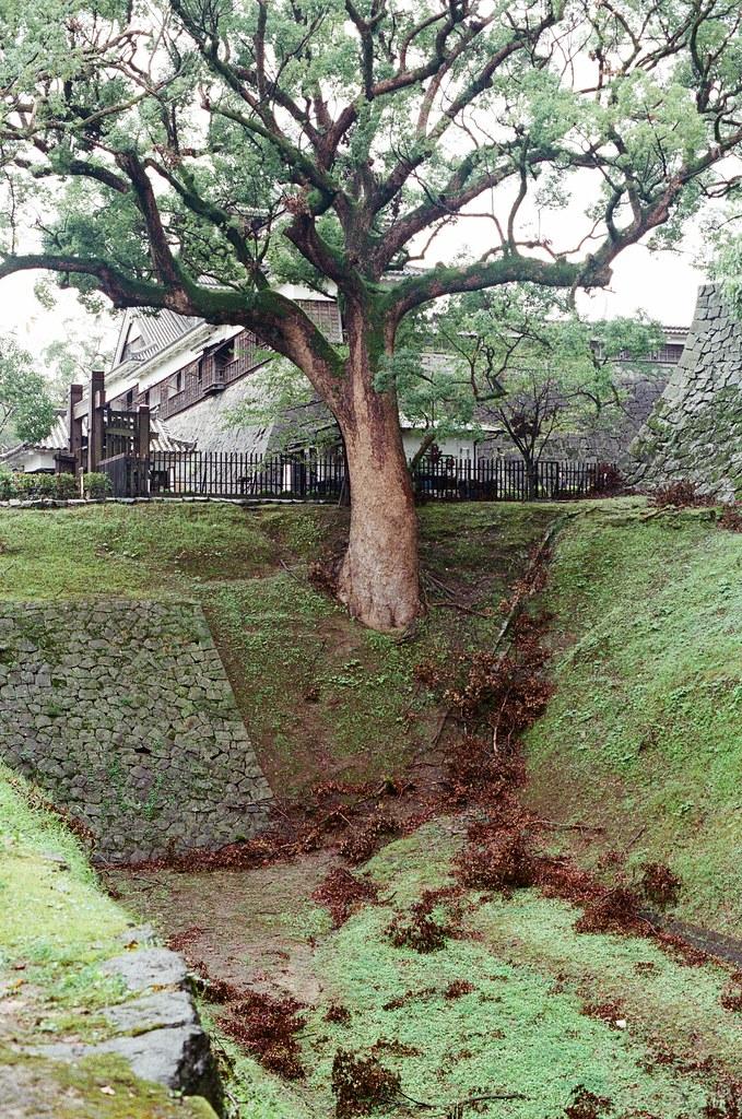 熊本城 熊本 Kumamoto 2015/09/06 熊本城外圍的護城河,很深,而且還長出超大的樹。  Nikon FM2 / 50mm Kodak UltraMax ISO400 Photo by Toomore