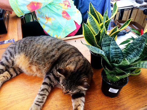 Cat and Snake Plants (October 7 2014)