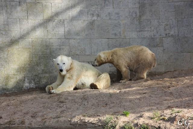 Zoo Rostock 19.09.20156