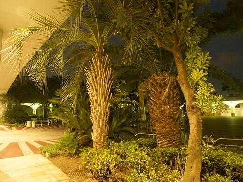 Phoenix trees 竹芝