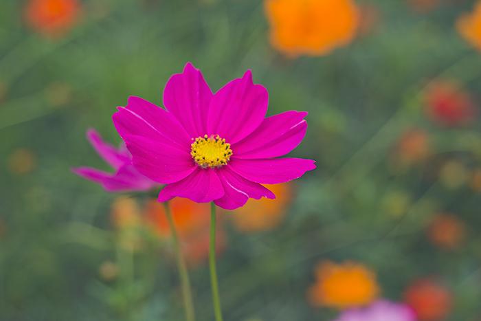 Hama-rikyu-Gardens-3