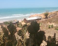 Cactus na praia... #BlogAuroradeCinemaviagens #canoaquebrada #praia #praiacearense #mar #praia #sol #natureza #ceara #auroradecinema #brazil