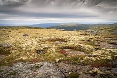 Toundra alpine II