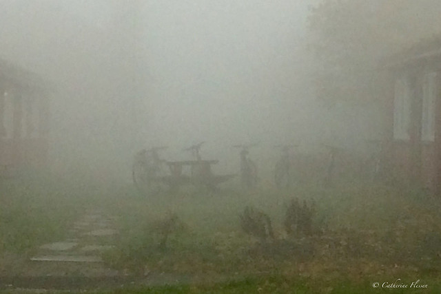 Bicycles in the mist...
