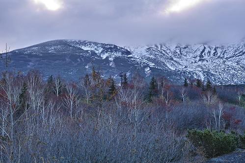 十勝岳は雪をかぶって既に落葉