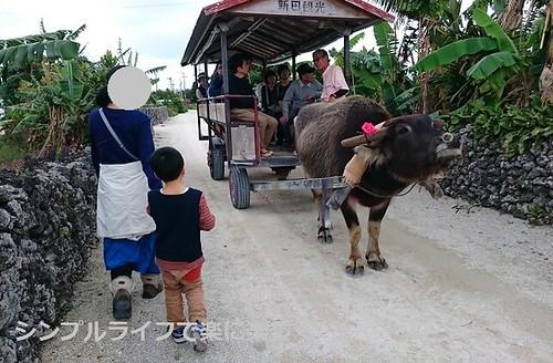 石垣島、竹富島・水牛車
