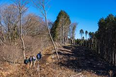 明王峠を越えて伐採地帯を歩む