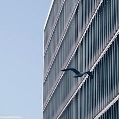 #shotoniphone7plus #architecture #porto #oporto #porto_ig #visitporto #portugal #loves_porto #portolovers #wanderlust #travel #travelgram #vsco #vscocam #guardiantravelsnaps #guardiancities #citytrip #travelphotography #igers_porto #visitportoandnorth #ig