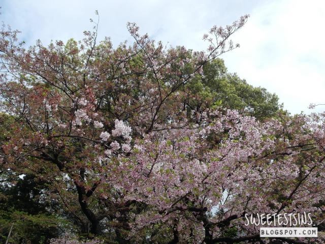japan tokyo trip ueno park 18