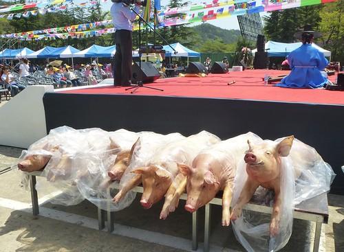 Co-Daegu-Parc Palgongsan-Fête 3 (1)