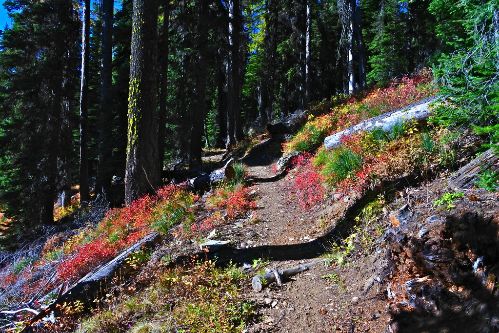 Along the Terrace Lake trail