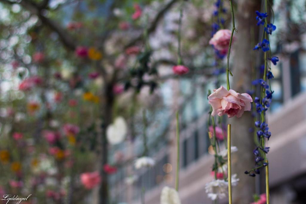 flower show-4.jpg