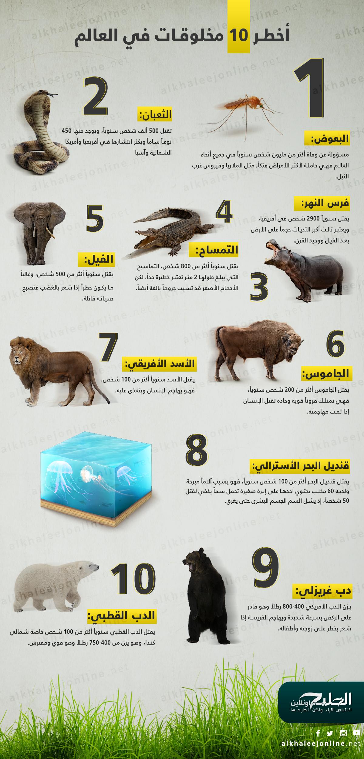 اخطر-حيوانات-العالم