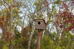 Big Birdhouse