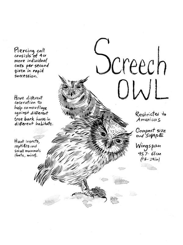 Owls_23_Screech_Owl
